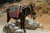 stock photo of burro  - typical greek donkey with multicolor saddle standing in the mountains Crete island Greece - JPG