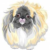 Vector Pedigreed Dog Sable Pekingese Breed
