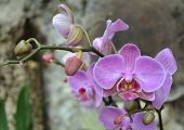 stock photo of orquidea  - orchid flowers  macro flora plant nature exotic - JPG