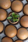 tree in eggs (conceptual)