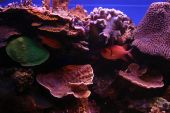 Great Marine Life at the Reef
