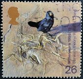 A stamp shows Galapagos Finch and Fossilzed Skeleton (Darwin's theory of evolution)