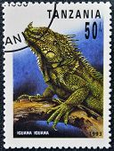 A stamp printed in Tanzania shows iguana iguana