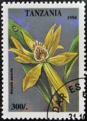 A stamp printed in Tanzania dedicated to tropical flowers shows encyclia pentotis