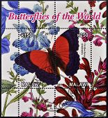 Stamp printed in Malawi dedicated to butterflies of the world shows cirrbocbroa semiramis