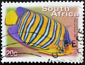 A stamp printed in RSA shows royal angelfish Pygoplites Diacanthus