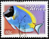 A stamp printed in RSA shows powder blue surgeonfish Acanthurus leucosternon
