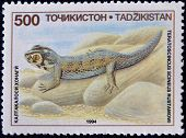 A stamp printed in Tajikistan shows a Common Wonder Gecko Lizard Teratoscincus scincus