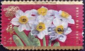 A stamp printed in USA dedicated to lunar new year shows narcissus flowers