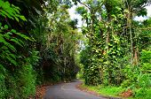 Road in a Jungle