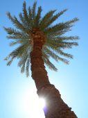 Sun gevolg van de Palm
