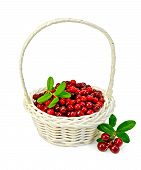Lingonberry Ripe In A White Basket