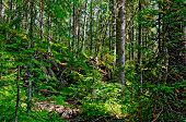 stock photo of ural mountains  - Taiga with green pine trees in the mountains of Northern Urals - JPG