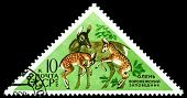 Vintage  Postage Stamp. Deer And Fawns.