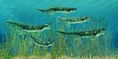 Devonian Orthacanthus Sharks