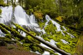 Clearwater Falls - Umpqua Scenic Byway