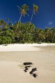 Two palm trees above sandy and rocky beach. Site of Survivor Cook Islands, Aitutaki