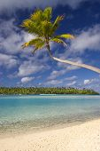 Palm tree stretching over beach towards lagooon. Aitutaki,The Cook Islands. One Foot Island, Aitutak
