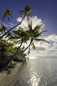 Backlit palm trees lining tropical beach