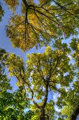 Trees Branches With Leaves, Mainz, Rheinland-pfalz, Germany