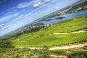 Vineyards On The Bank Of Rhein River, Ruedesheim, Rhein-main-pfalz, Germany