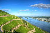 stock photo of reining  - Vineyard near Burg Ehrenfels Ruedelsheim Hessen Germany - JPG