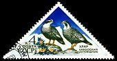 Vintage  Postage Stamp. Caucasian Snowcock.