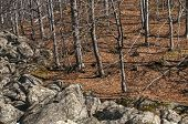 Moraines and leafless beech forest