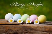 picture of pasqua  - colored eggs in natural background for Easter with words Buona Pasqua