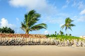 Eroded Beach With Palms, Pititinga, Natal (brazil)