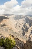 foto of jabal  - Bush growing on an edge of a canyon - JPG