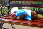 ape sleeps on bench