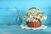 Beautiful snowdrops in basket on blue wooden table