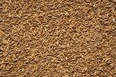 foto of cumin  - Spice seeds of cumin - JPG