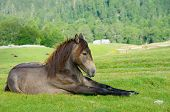 young horse resting in