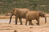 Two elephants facing opposite directions at a water hole