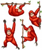 Illustration of orangutan hanging on vines