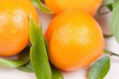 picture of satsuma  - close up picture of fresh orange satsumas - JPG