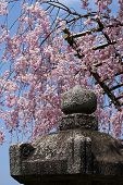 Stone Lantern With Cherry Blossoms, Japan