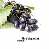 Grapes Cluster With Grapevine Isolated On White Background. Blue Ripe Grape With Copyspace