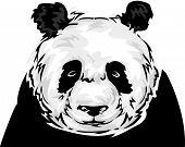 Illustration Featuring a Panda