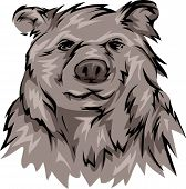 stock photo of grizzly bear  - Illustration Featuring a Grizzly Bear - JPG