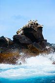 Rock with sea birds in ocean off the coast of Galapagos Isabela island, Ecuador