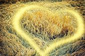 Golden Wheat Field With Sunny Heart Element