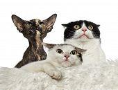 Worried cats