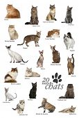 Cat breeds poster in French