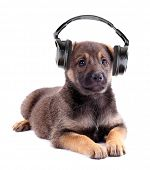 Cute puppy and headphones, isolated on white