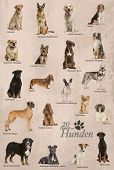 Dog breeds poster in German