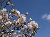 Magnolia + Cloud