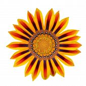 Red And Yellow Flower Isolated